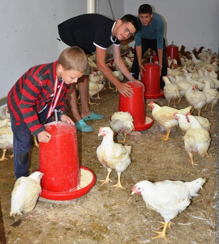 Drei Jungen hantieren an Futteboxen im Hühnerstall