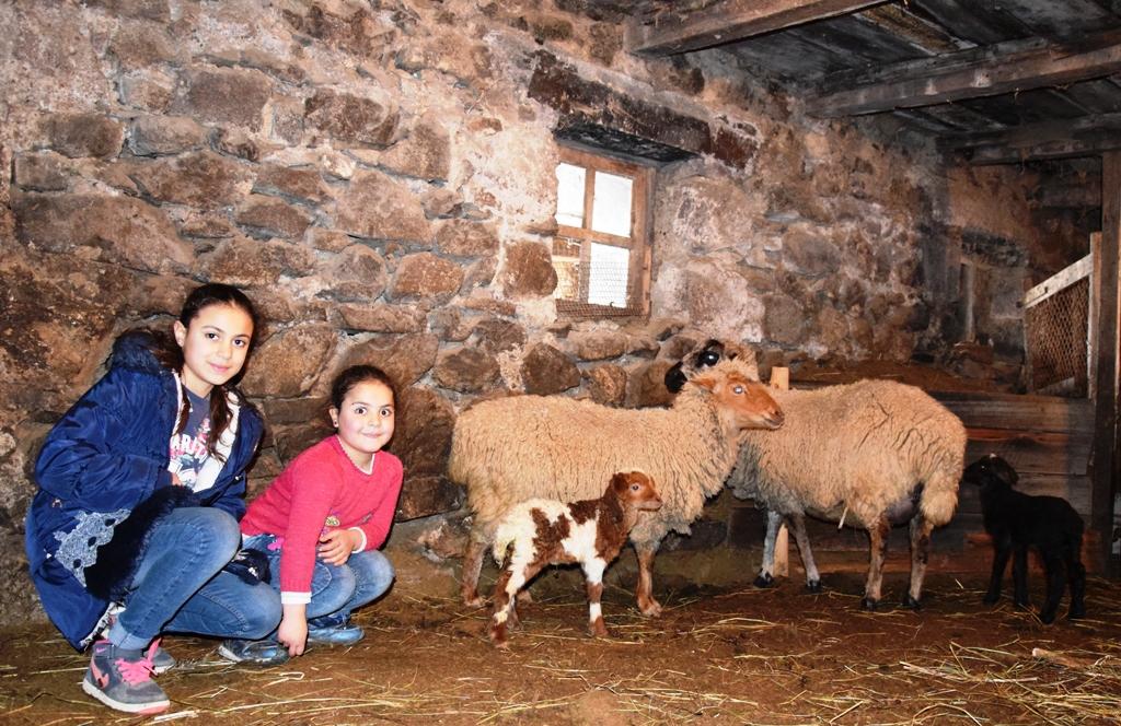 Zwei Mädchen mit Schafen